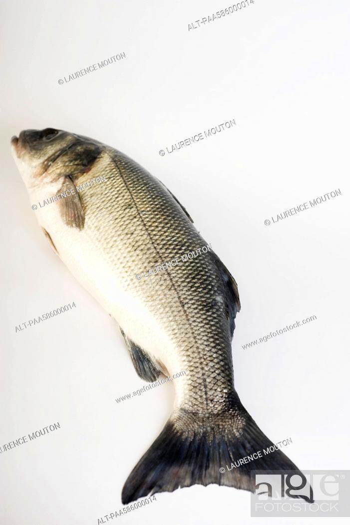 Stock Photo: Sea trout.
