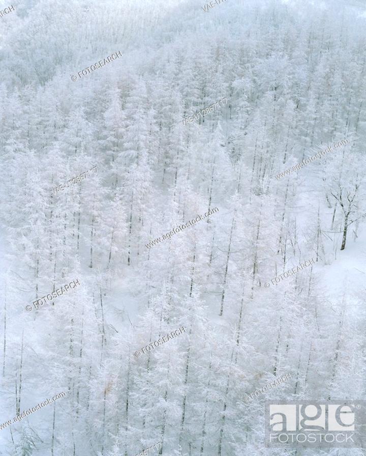 Stock Photo: scenery, scenic, snow-covered, snow, plant, tree.