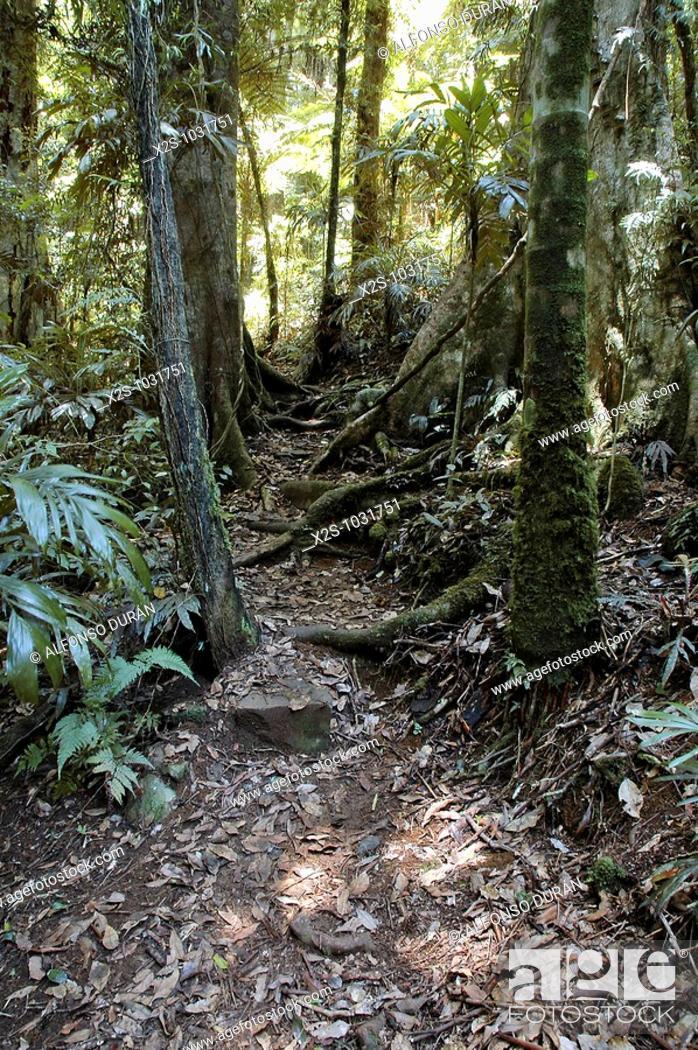 Stock Photo: Rainforest, Nimbin, Queensland, Australia.