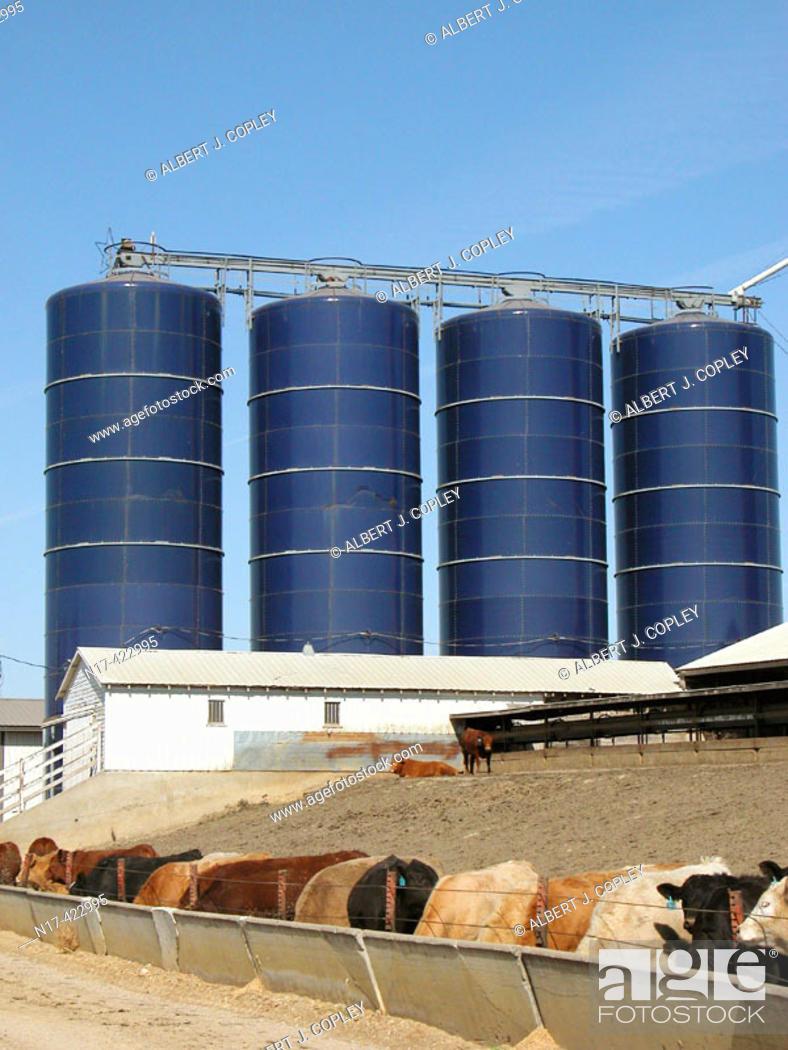 Stock Photo: cattle feed storage bins, Iowa.