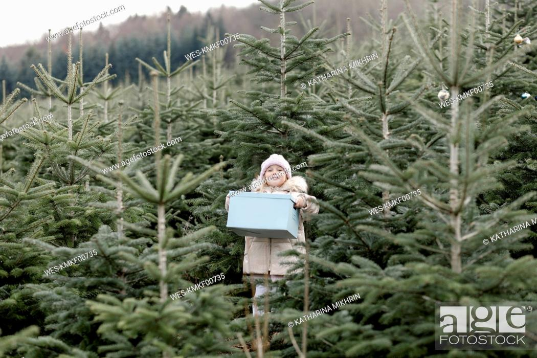 Stock Photo: Girl carrying gift box on a Christmas tree plantation.