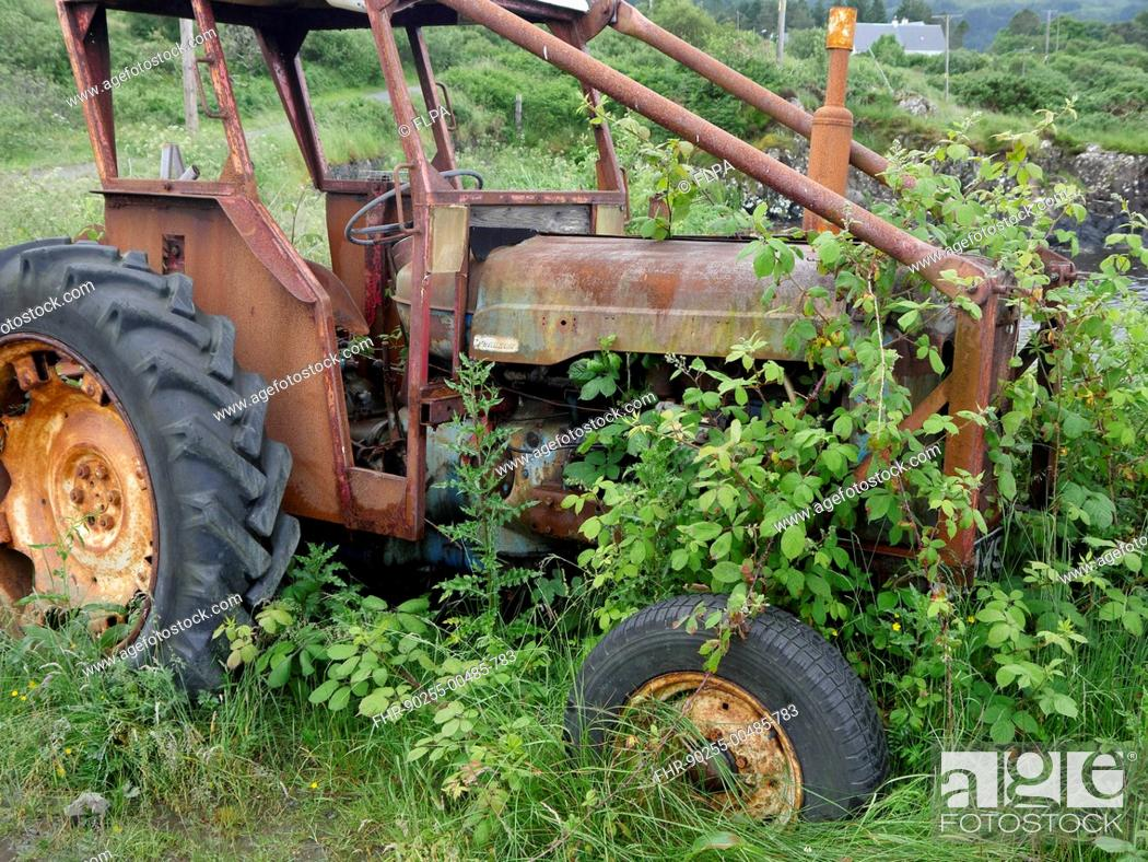Stock Photo: Rusty abandoned Fordson tractor, overgrown with brambles, Isle of Mull, Inner Hebrides, Scotland, July.