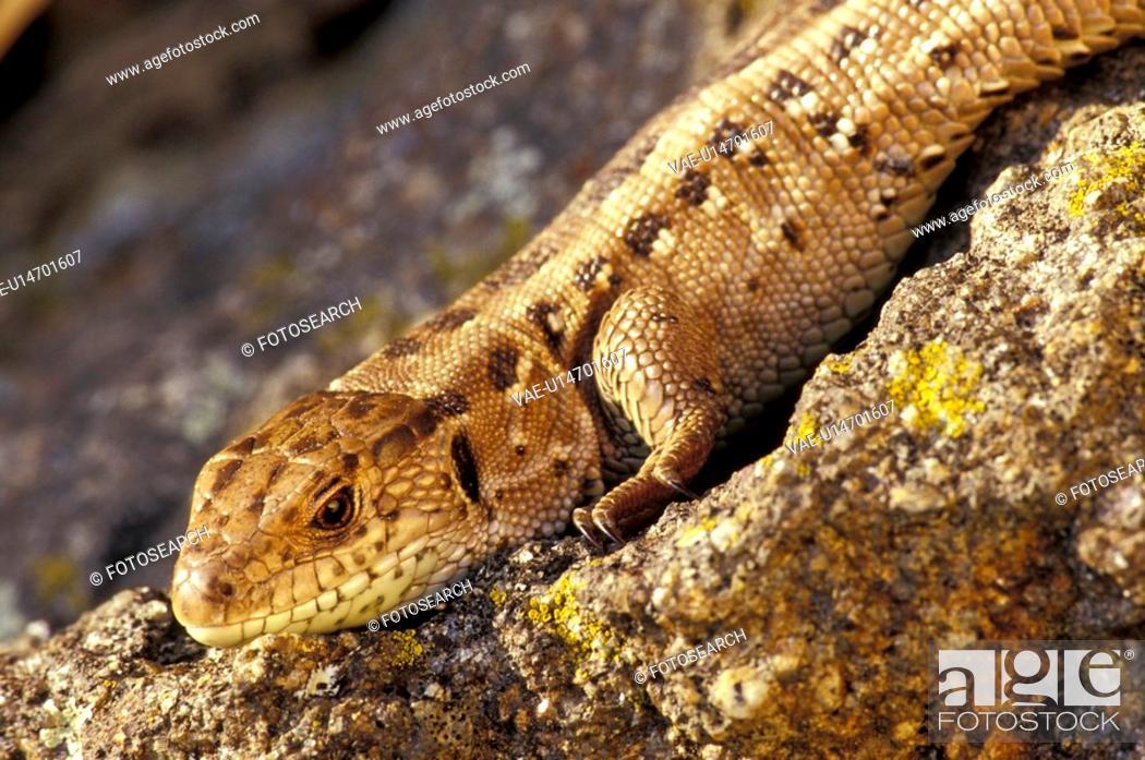 Stock Photo: beige, body, animals.