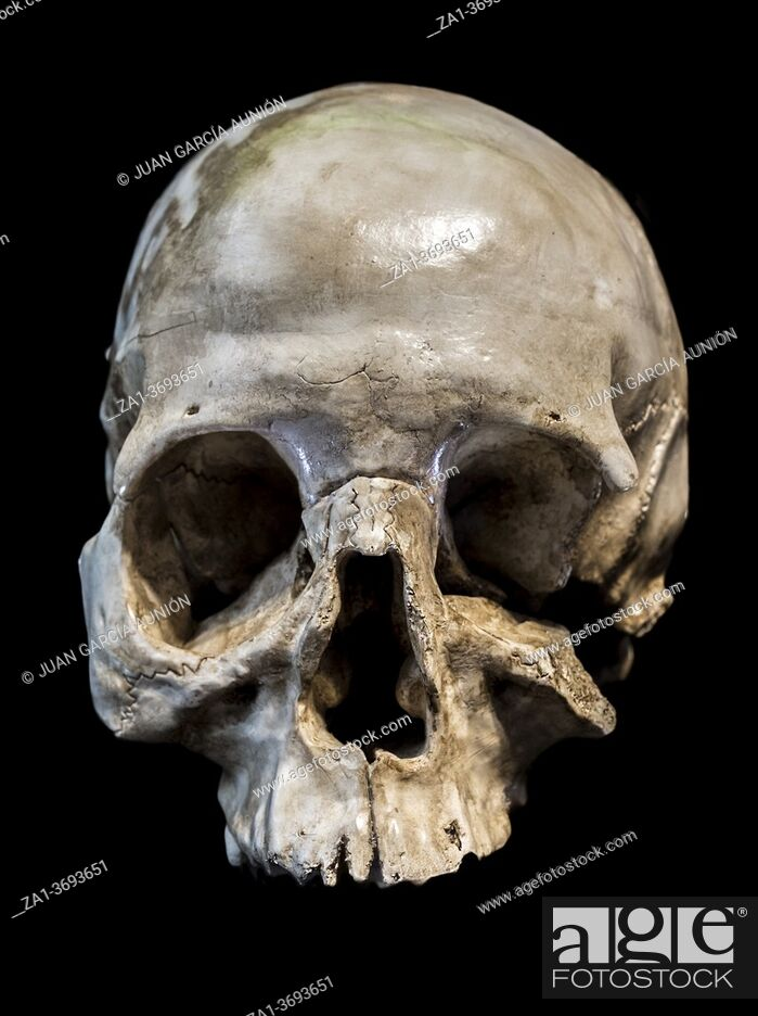 Stock Photo: Skull found at Maltravieso Cave. Front view. Extremadura, Caceres, Spain.
