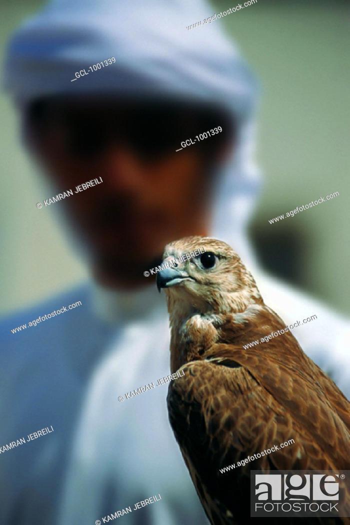 Stock Photo: Arab man holding a falcon, UAE.