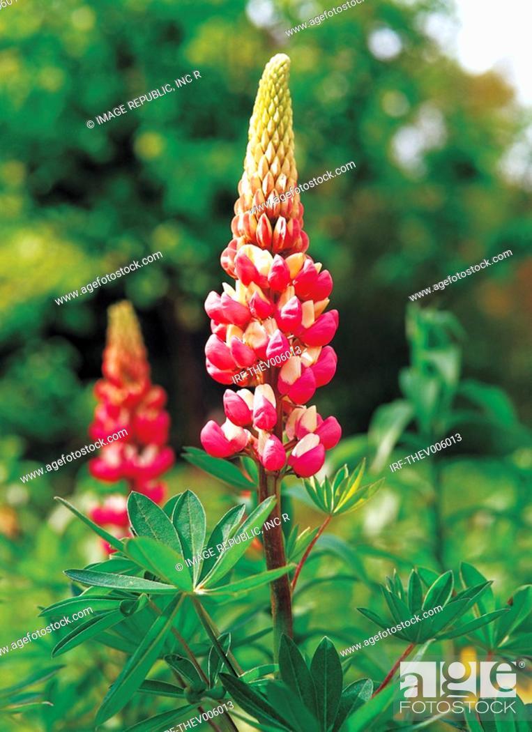 Stock Photo: flower.