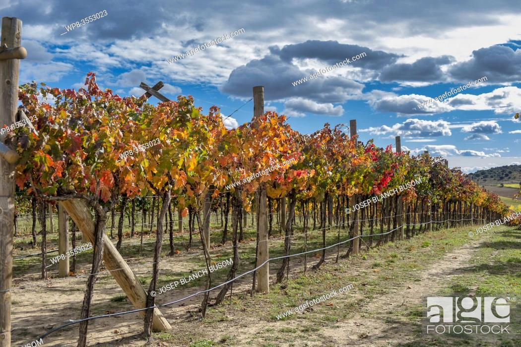 Imagen: Vineyards in Autum. La Rioja. Spain.