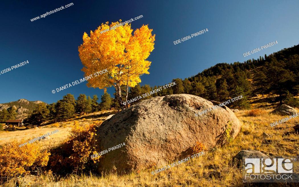 Stock Photo: North America, USA, ,Colorado, Rocky Mountain National Park Aspen.