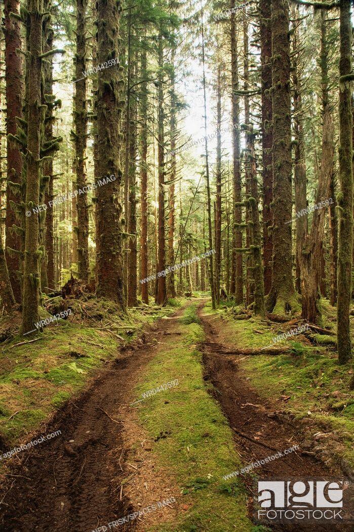 Imagen: Dirt Road Through Forest.