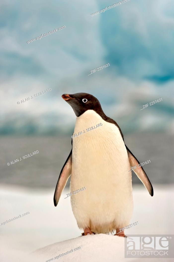 Stock Photo: Adelie penguin on ice floe in the South Orkney Islands, Antarctica. Digitally manipulated Image. Composite of two images.