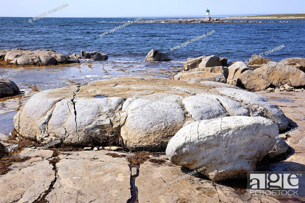 Stock Photo: Giant bun-shaped, fossilized organism that thrived in a tidal zone near Flower's Cove, Newfoundland some 650 million years ago.