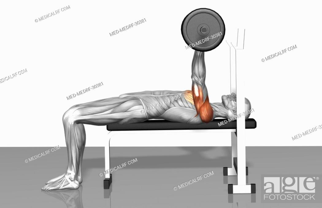 Stock Photo: Bench press Part 1 of 2.