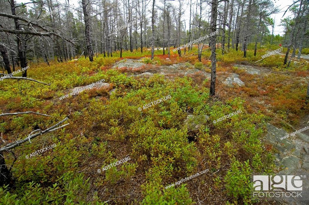 Stock Photo: Jack Pine Trail, Cape Breton Highlands National Park, Nova Scotia, Canada.