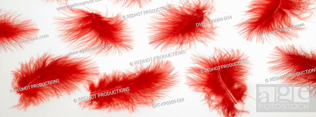 Stock Photo: Panoramic Colours, Feathers.