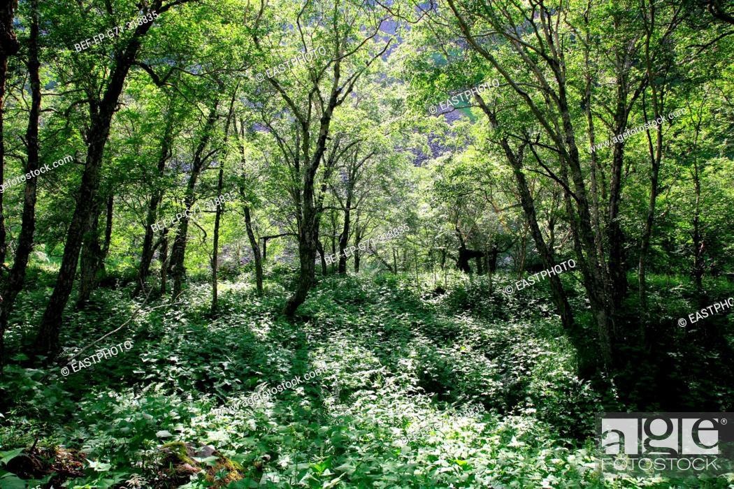 Stock Photo: Scenery of woods.
