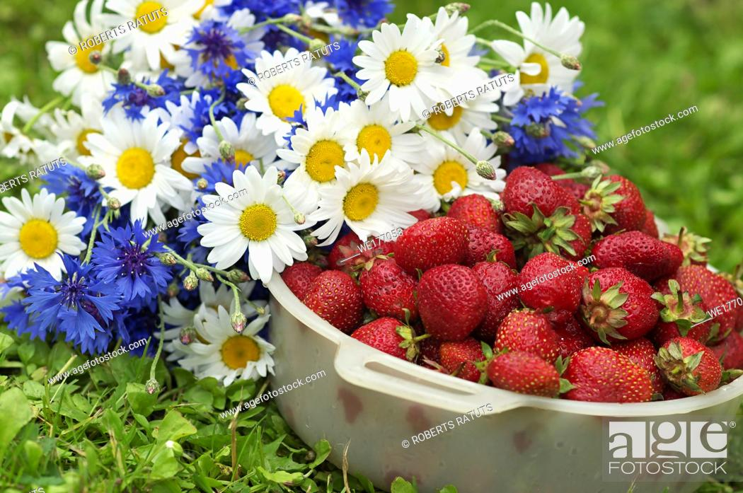 Imagen: Plastic bowl with strawberrry next to wild flowers.