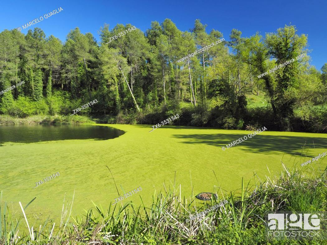 Stock Photo: Can Bassés small dam. Springtime at Perafita village countryside. Lluçanès region, Barcelona province, Catalonia, Spain.