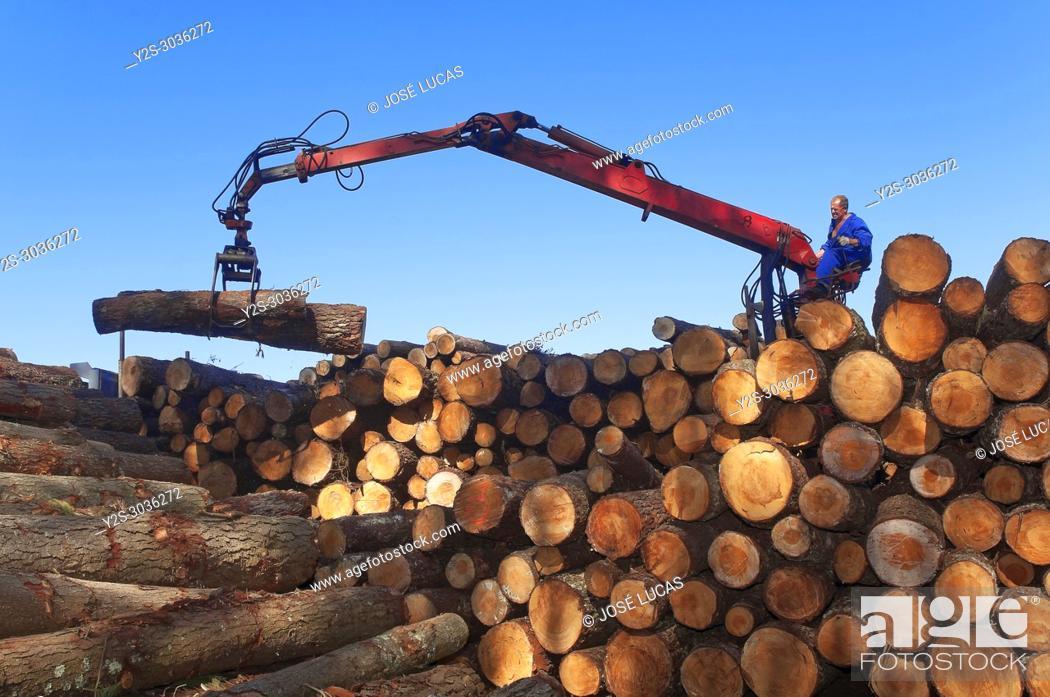 Stock Photo: Wood industry, Morpeguite, Muxia, La Coruña province, Region of Galicia, Spain, Europe.