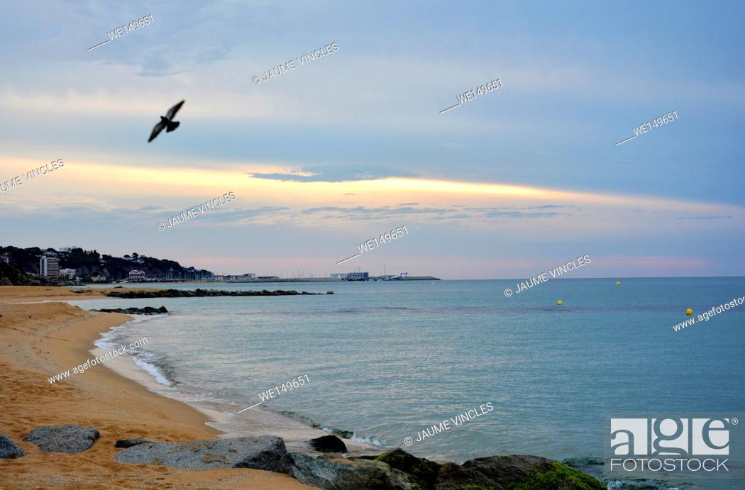 Stock Photo: Pigeon flying over the beach. Caldes d'Estrac, Maresme, Barcelona Province, Spain.