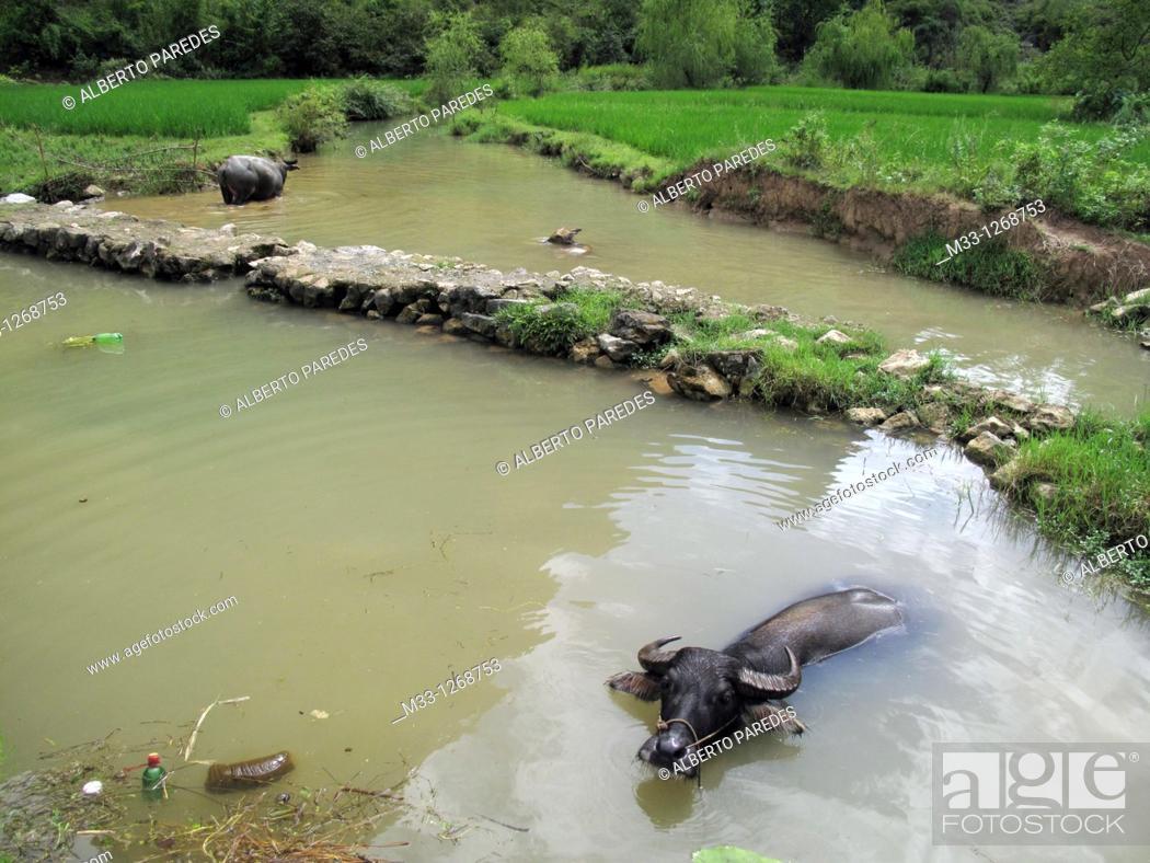 Stock Photo: Yangshuo near Guilin, Guangxi Province, China.