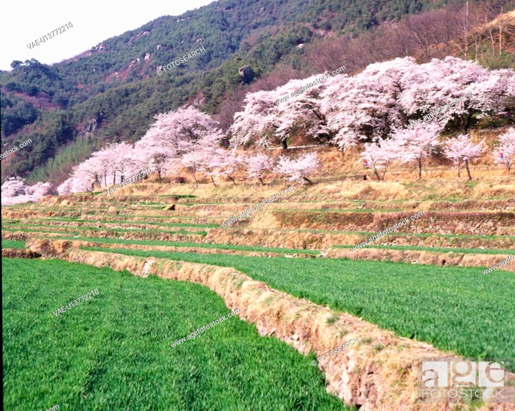 Stock Photo: flower, landscape, plants, plant, scene, flowers, nature.