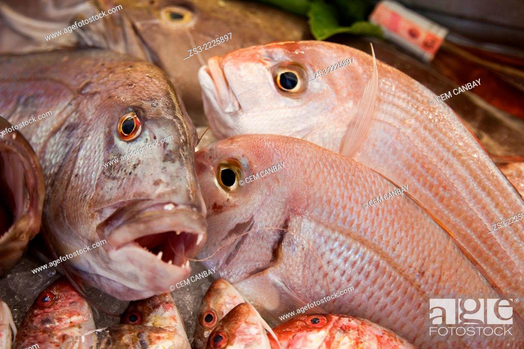 Stock Photo: Fish in the freezer, Bodrum, Mugla, Aegean Sea, Turkish Riviera, Turkey, Europe.