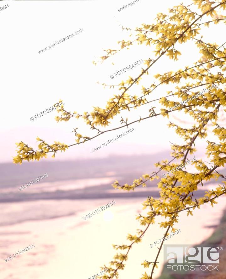 Stock Photo: river, landscape, spring, season, scene, riverside, nature.