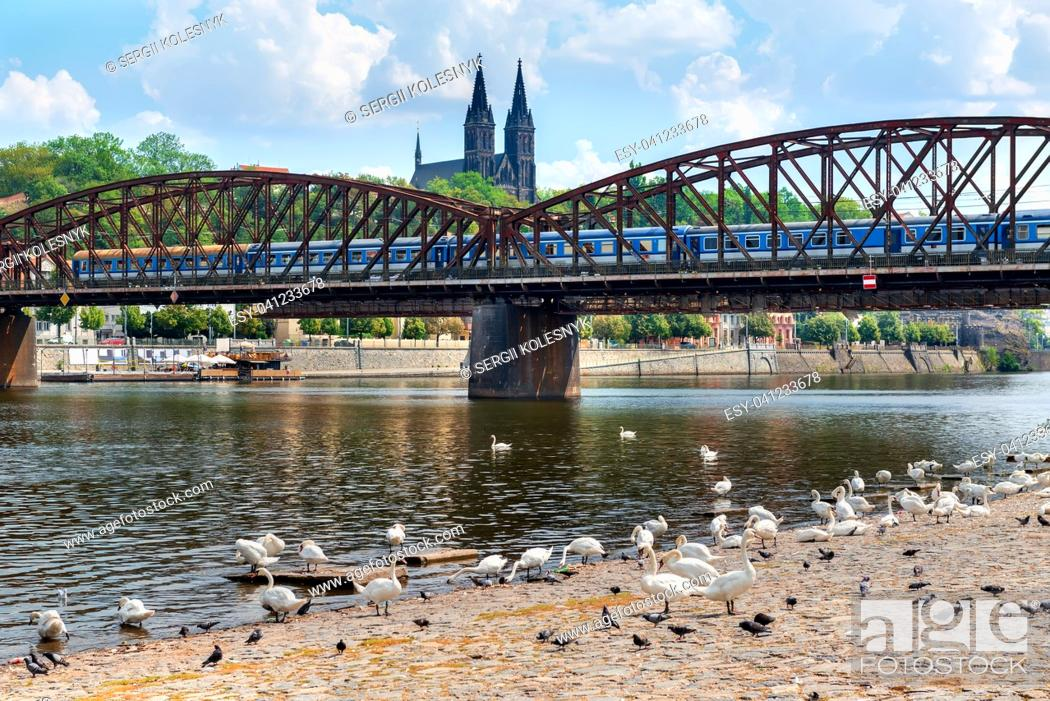 Stock Photo: Swans near Railway bridge with the view on St Peter and Paul cathedral in Prague.