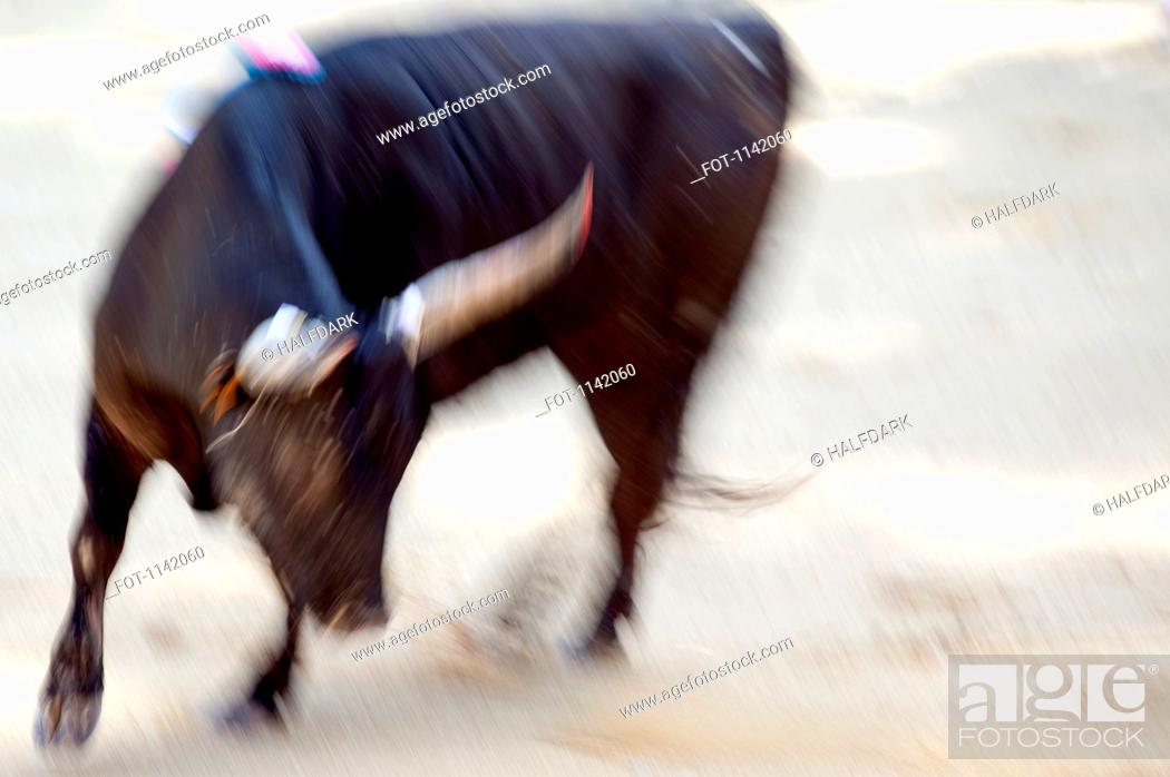 Stock Photo: A bull in an arena.