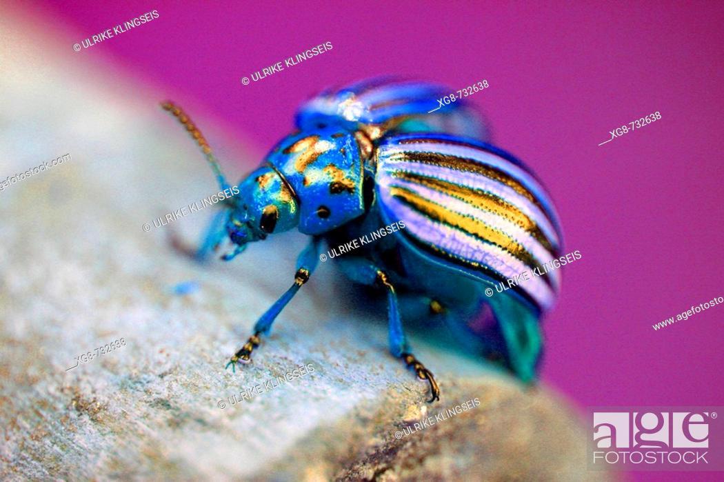Stock Photo: Enchanted beetle.