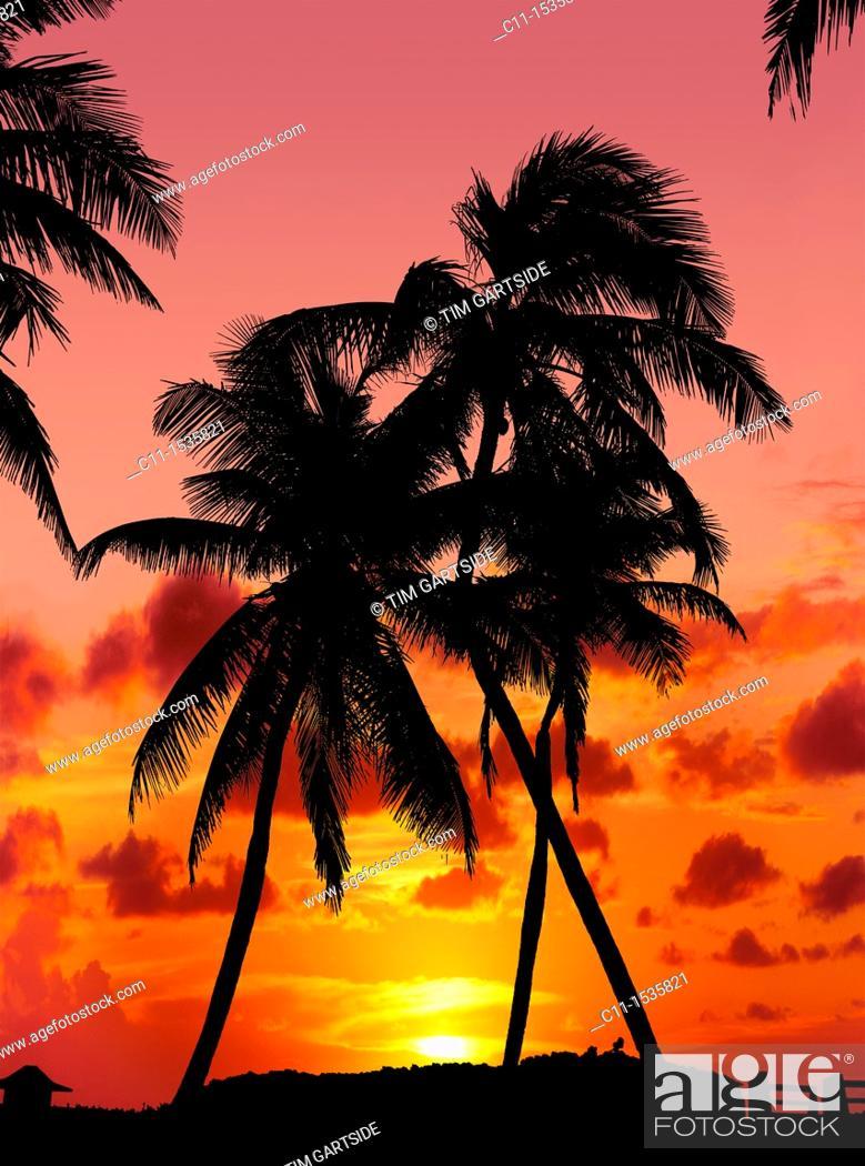 Stock Photo: naples orange sunset with palm trees florida usa.