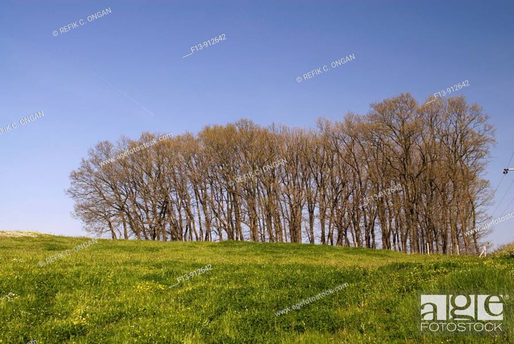 Stock Photo: trees in field.