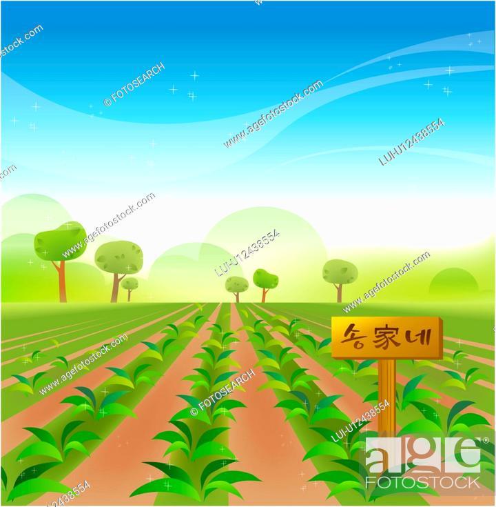 Stock Photo: vegetable farm, outdoors, weekend farm, path, scenic, farm.