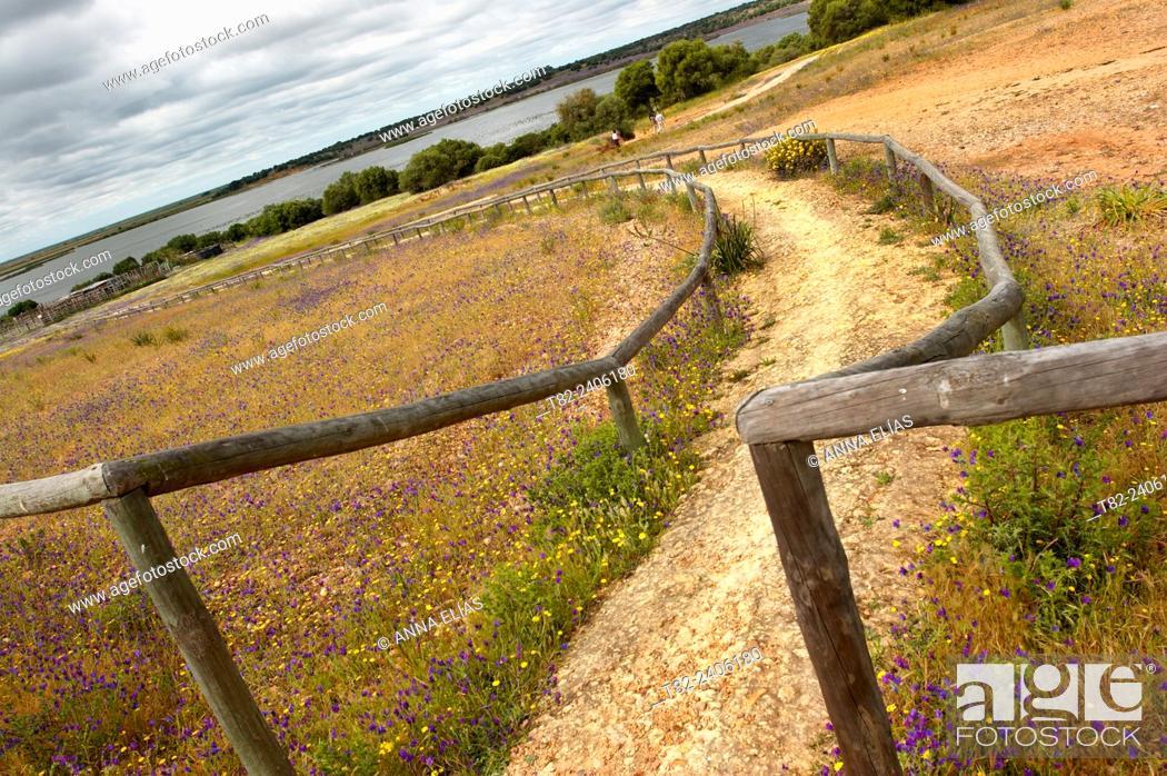 Stock Photo: Dehesa de Abajo, natural landscape, Isla Mayor, Sevilla, Andalucia, Spain, Europe.
