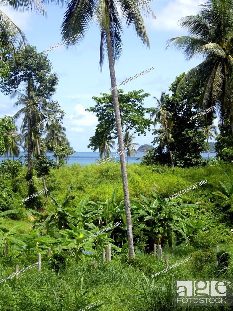 Stock Photo: Palmtrees and banana trees with a sea view in Ko Chang island, Thailand.