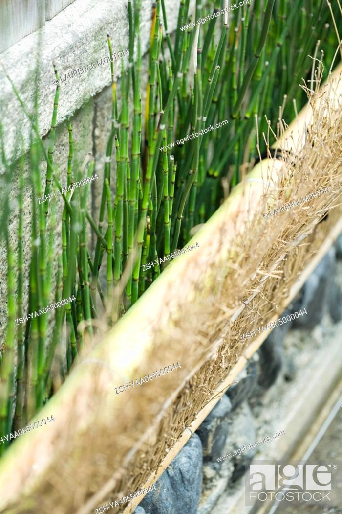 Stock Photo: Garden border of rushes and dried twigs, close-up.