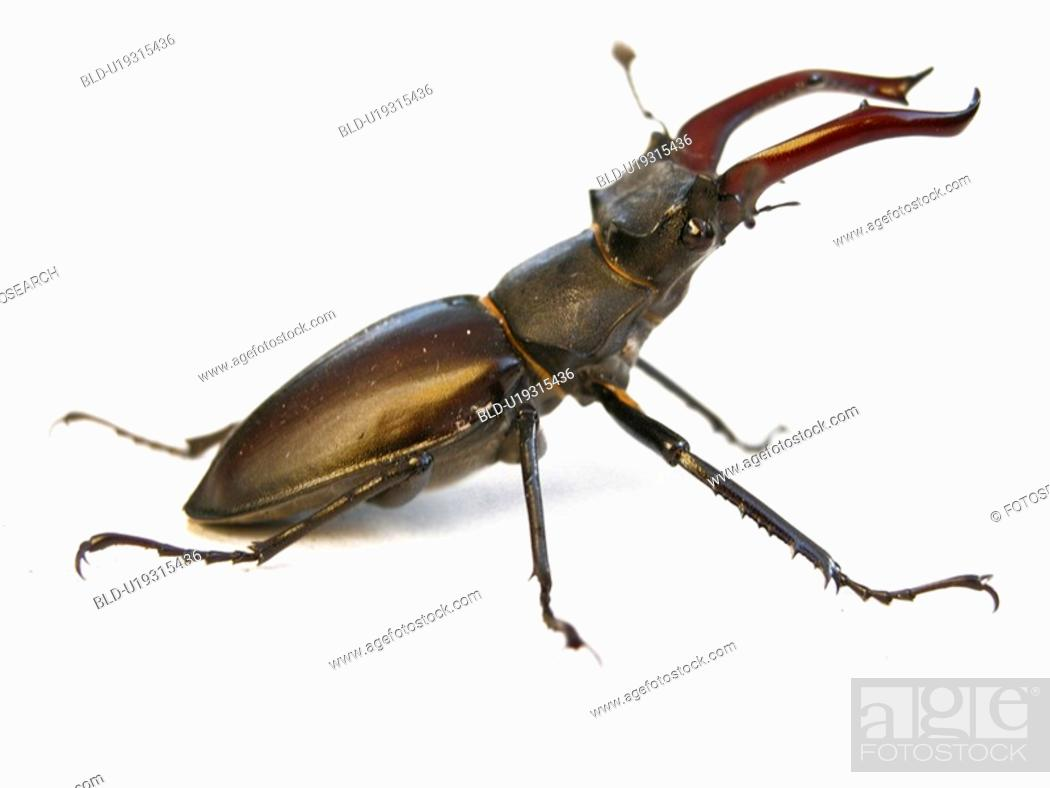 Stock Photo: animals, CLOSE, beetle, Austria, alfred.