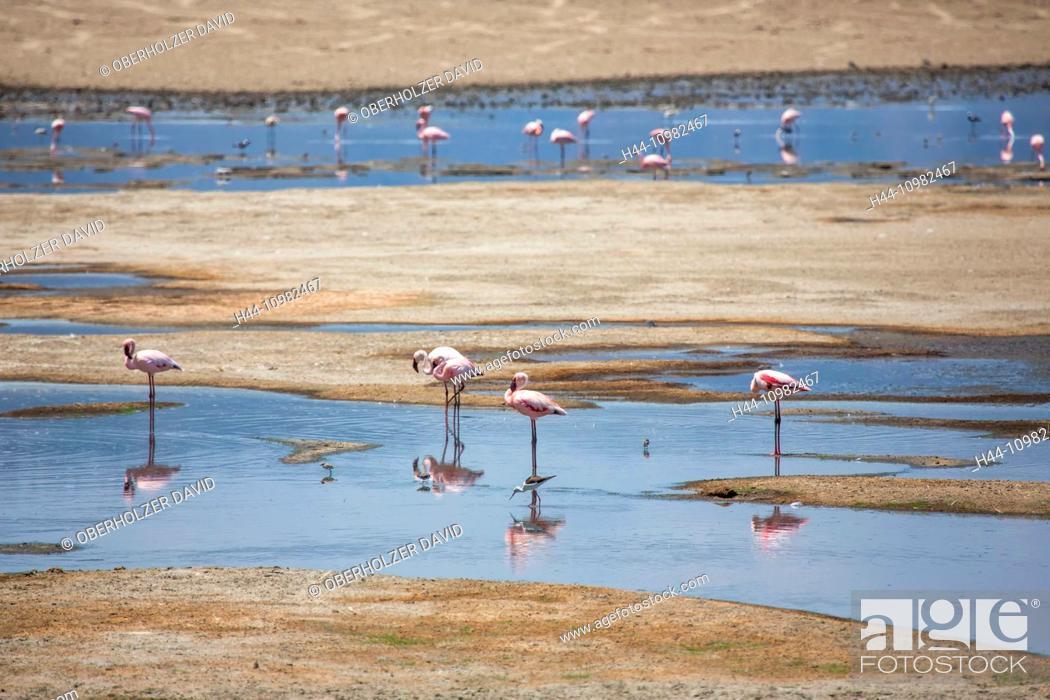 Stock Photo: flamingos on Lake Manyara in Tanzania.