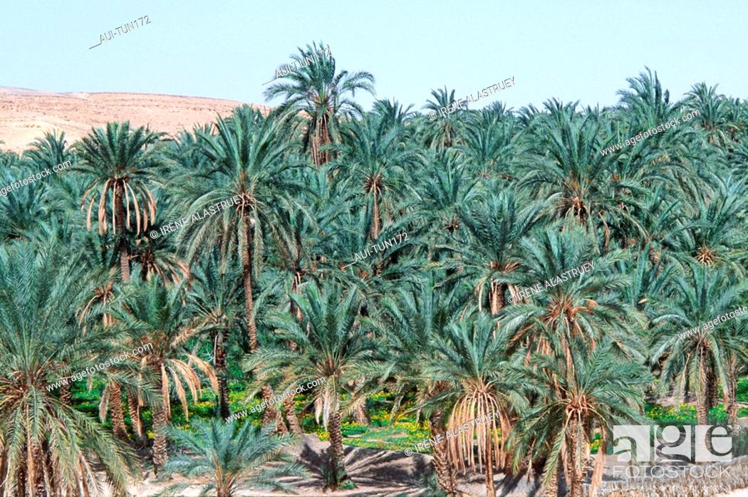 Stock Photo: Tunisia - The South - Chott el Jerid Region - Montain Oasis - Tozeur Region - Mides Oasis.