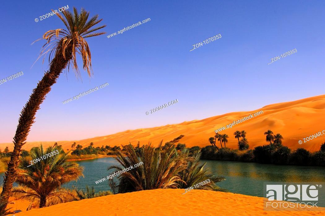 Photo de stock: Palmen am Ufer des Um el Maa See im Ubari Sandmeer, Sahara, Libyen / Palm trees on the shore of the Um el Maa lake in the Awbari sand sea, Sahara desert, Libya.