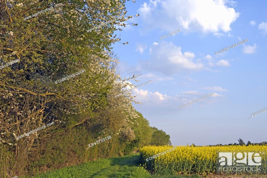 Stock Photo: Eure-et-Loir department, Centre-Val-de-Loire region, France, Europe.