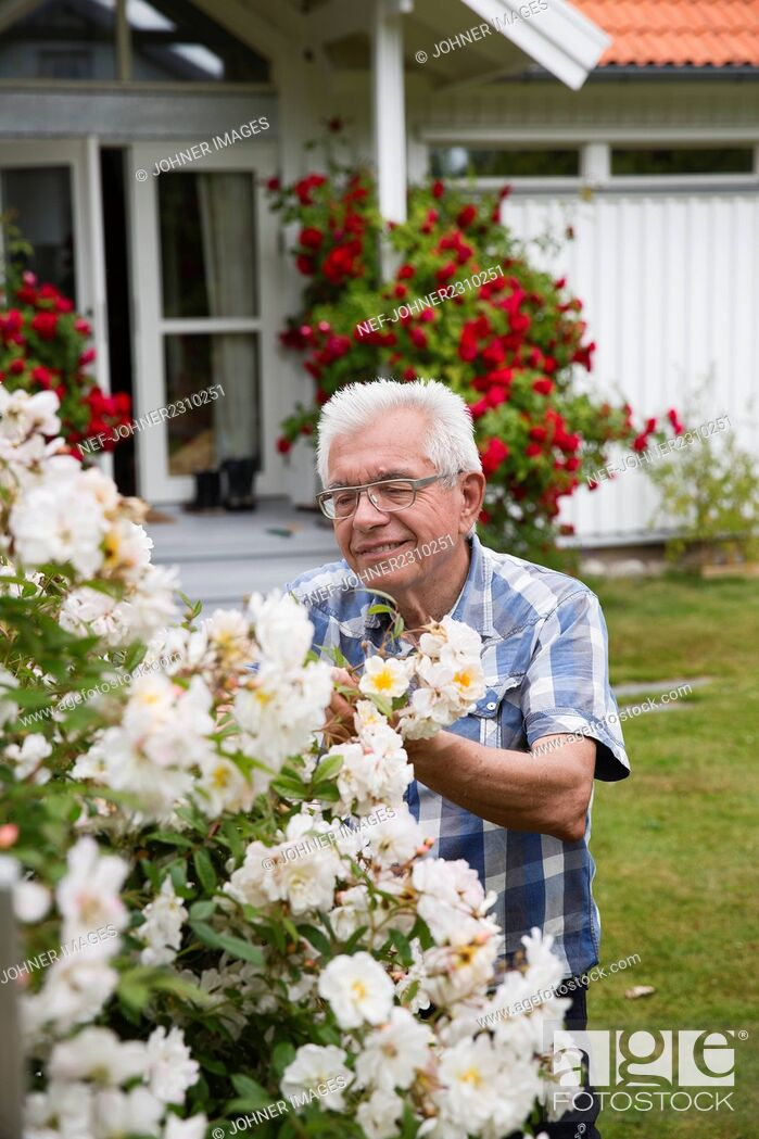 Stock Photo: Senior man in garden.