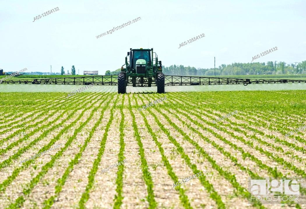 Stock Photo: A high clearance sprayer gives a ground chemical application of herbicide to early growth soybeans, near Niverville; Manitoba, Canada.