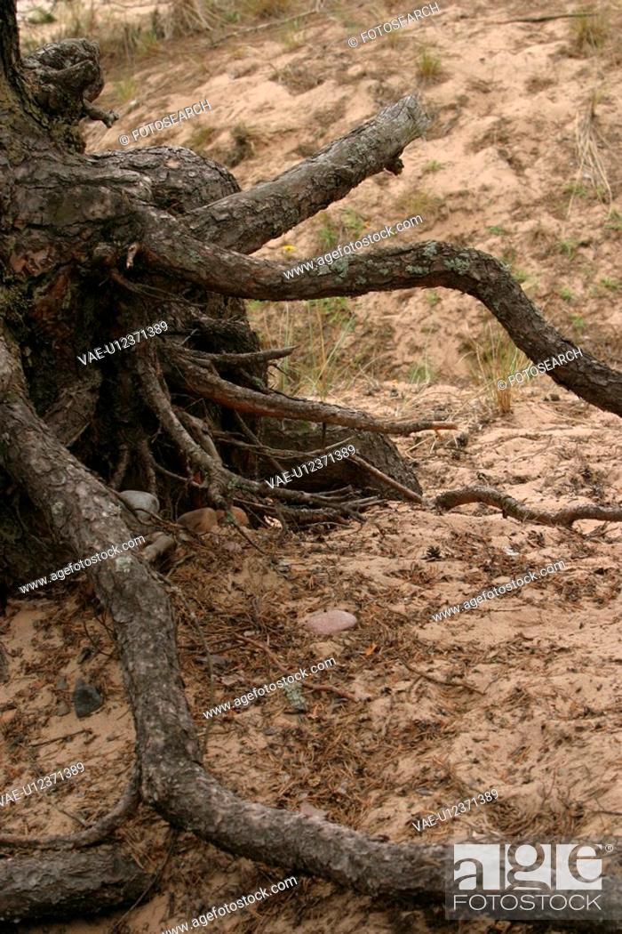 Stock Photo: embedded, spreading, roots, root, pattern, background.