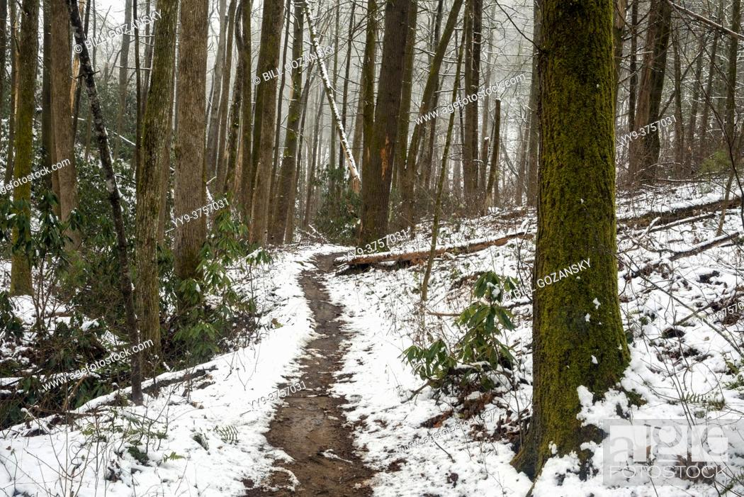 Stock Photo: Snowy forest trail - Sycamore Cove Trail - Pisgah National Forest, Brevard, North Carolina, USA.