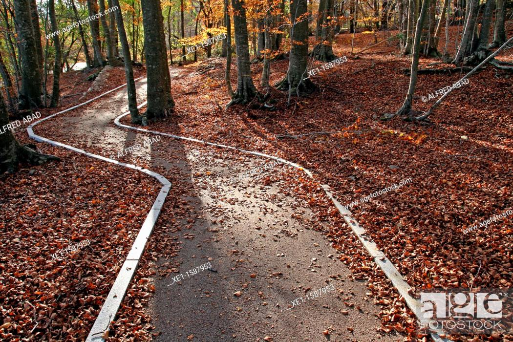 Stock Photo: way, beech, autumn, Montseny Natural Park, Catalonia, Spain.
