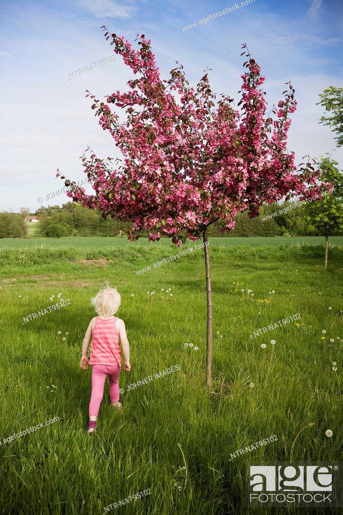Stock Photo: Girl running near flowering apple tree.