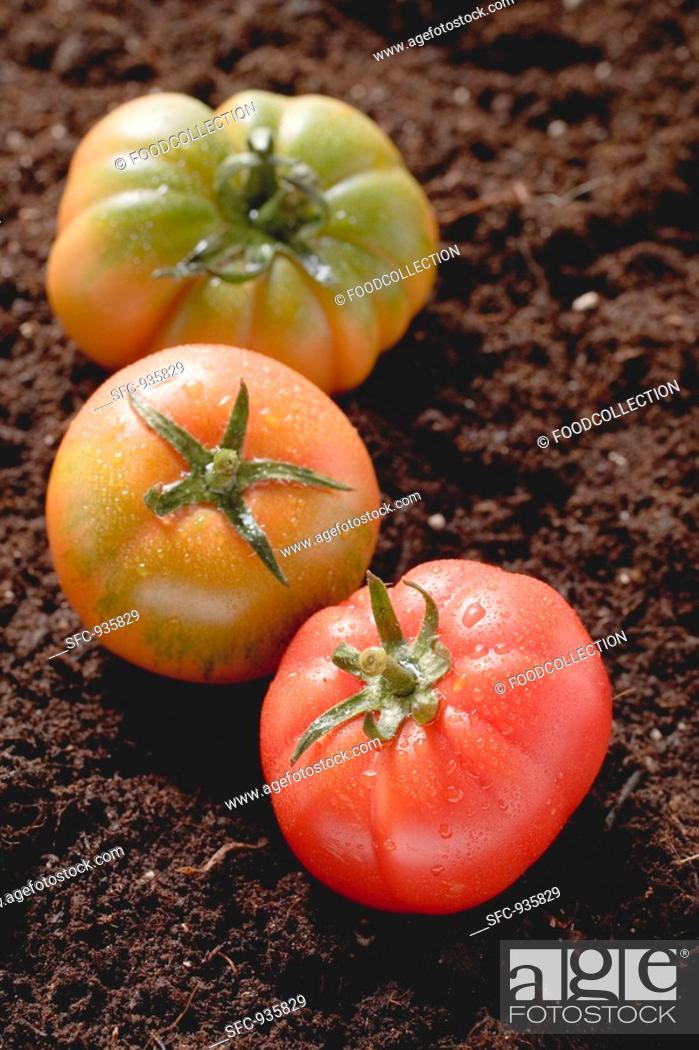 Stock Photo: Three tomatoes on soil.