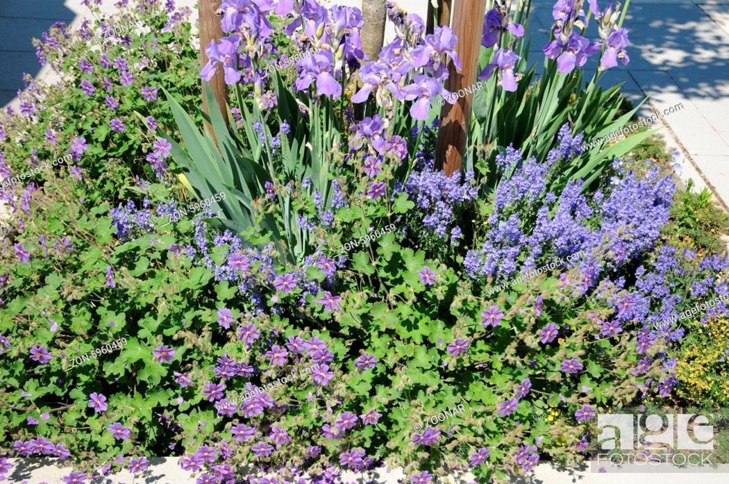 Geranium Iris Veronica Blaue Stauden Stock Photo Picture And