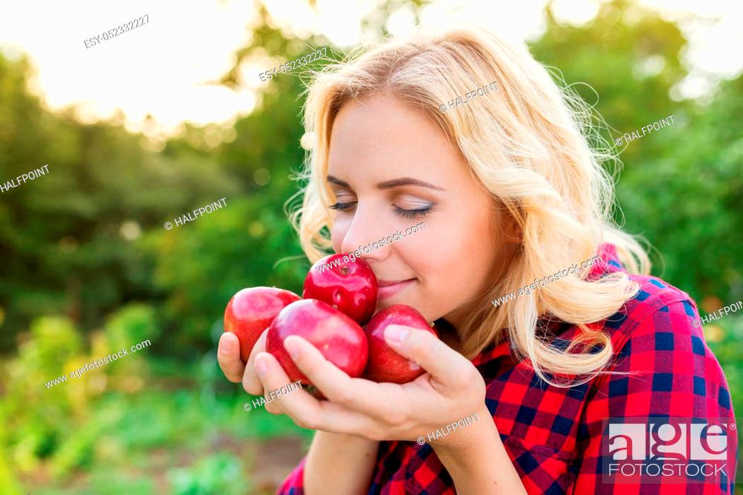 Stock Photo: Beautiful young blond woman in checked red shirt harvesting apples, holding them in her hands, smelling them.